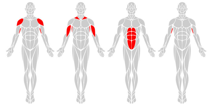 Muscle Groups: A vector diagram of the major muscles found in the body